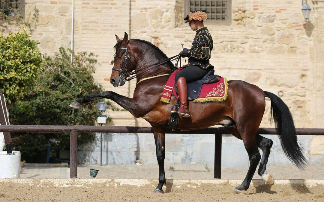 École d'équitation de Cordoue