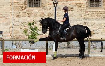 Cours d'équitation aux écuries royales de Cordoue