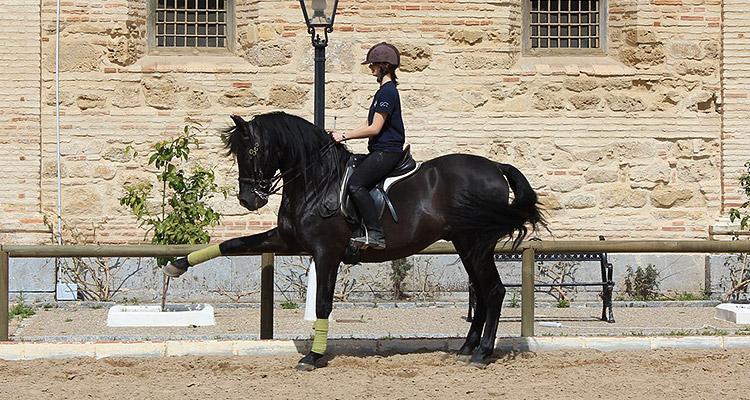 Équitation à Cordoue
