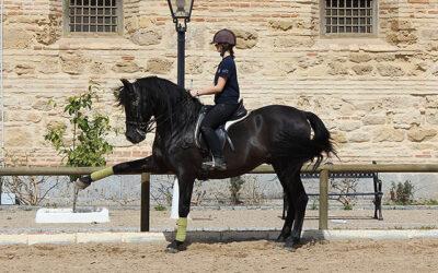 Cursos Equitación Córdoba